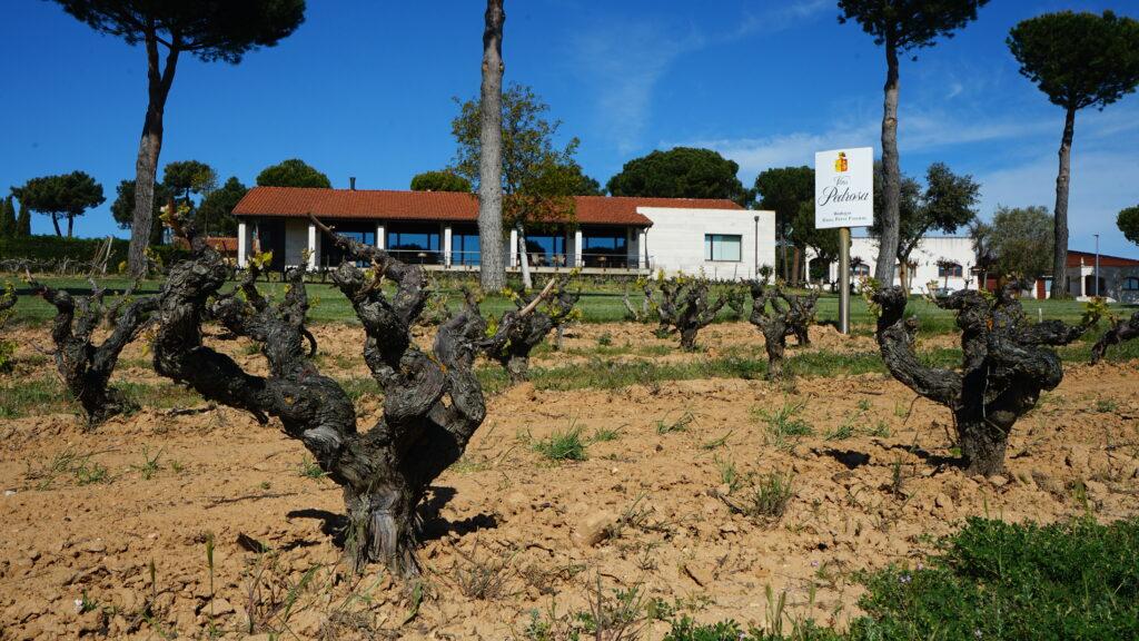 Vineyard Viña Pedrosa